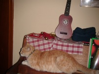 The Cats 005